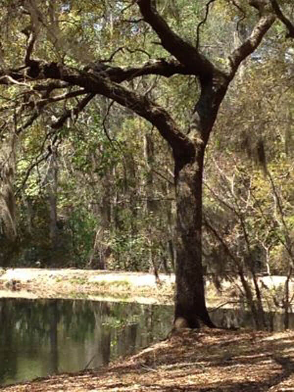 tattnall county black singles The ohoopee river originates in washington county and flows south for  the  ohoopee river, with soft white sandbars and clean black water, is truly one of.