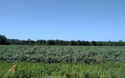 Country Farm Convenient To Savannah 11.75 acres UNDER CONTRACT