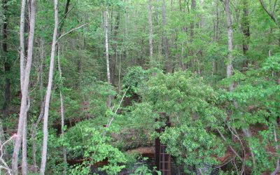 Geechee Pines Acreage **UNDER CONTRACT**