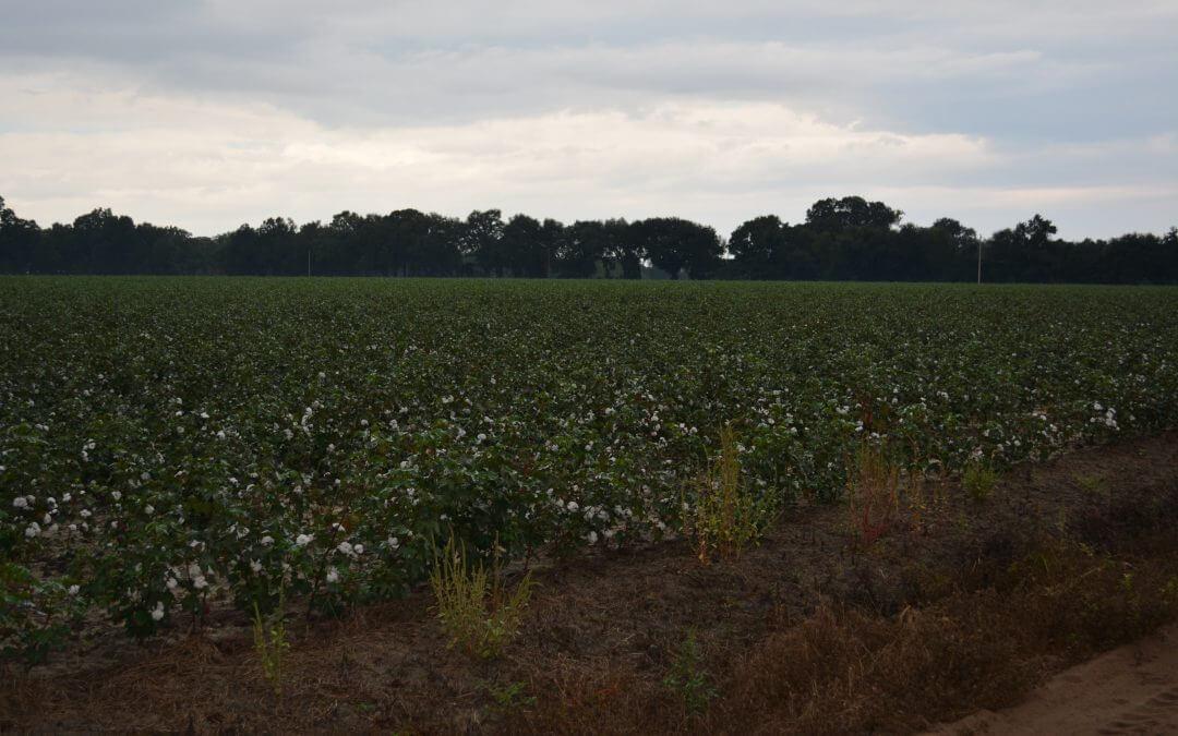 South Bulloch Farm