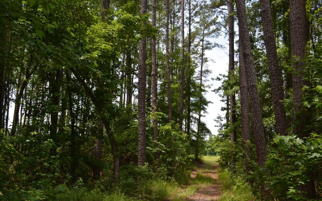 The Haskell Tract (351 acres in South Carolina)
