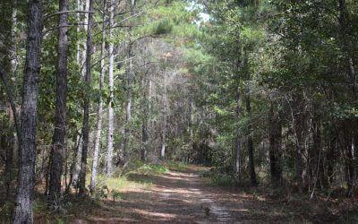Rolling Hills, 320 Acres in Screven County