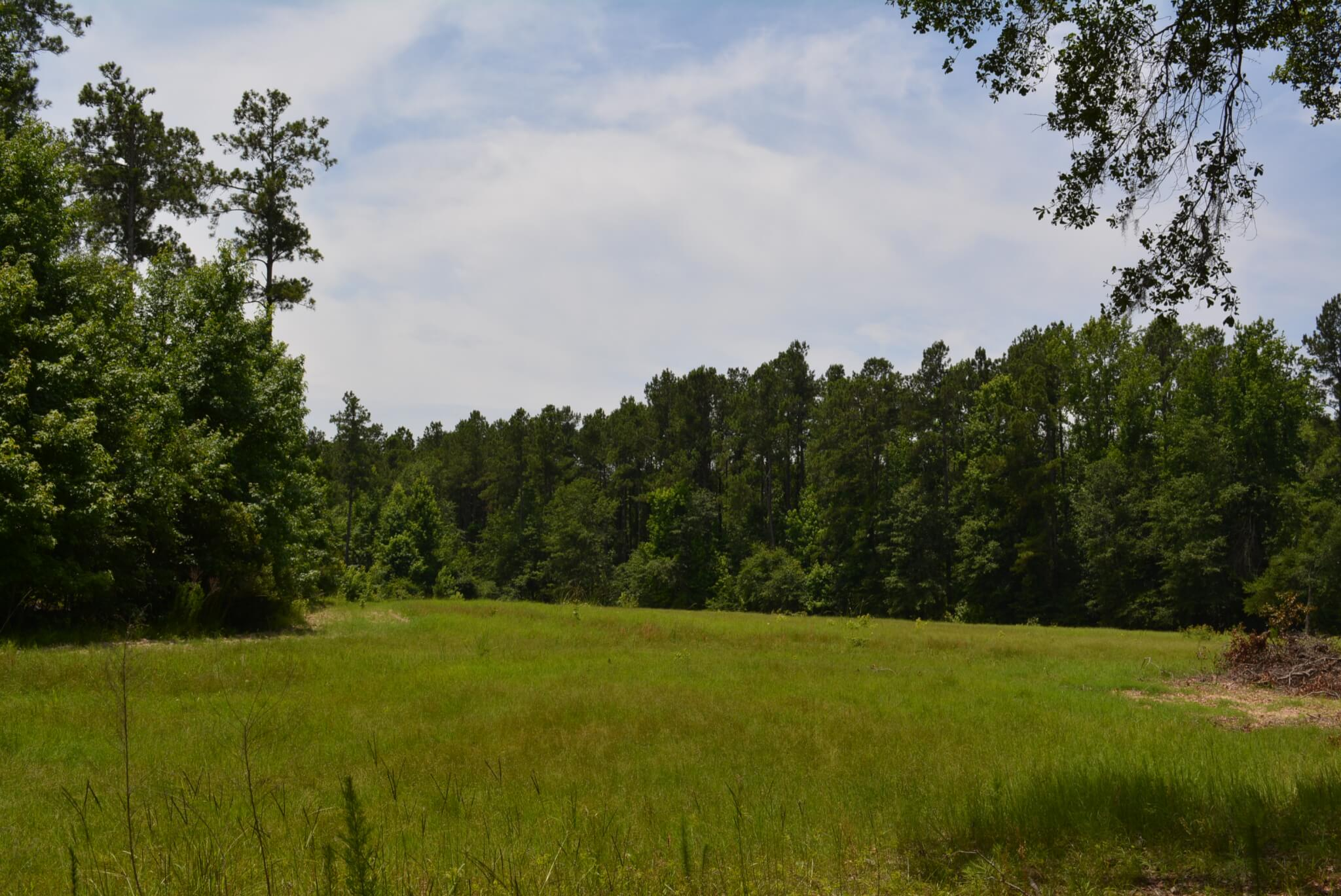 The Haskell Tract 351 Acres In South Carolina Land