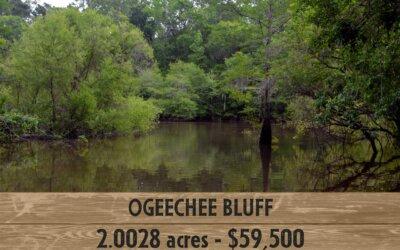 Ogeechee Bluff